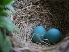 nest_eggs.jpg